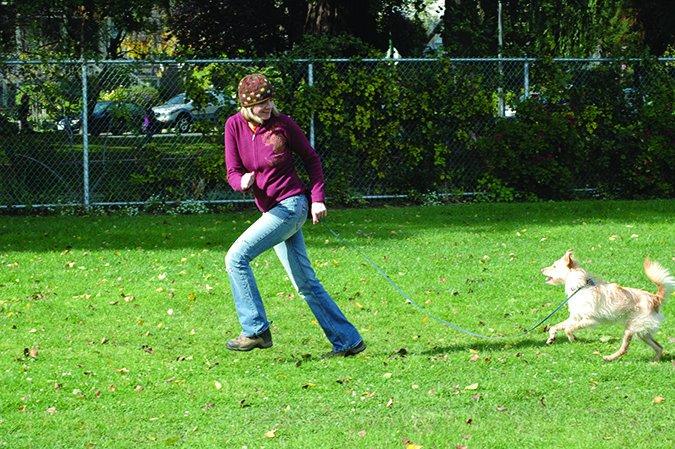 Usar los paseos para entrenar a su perro