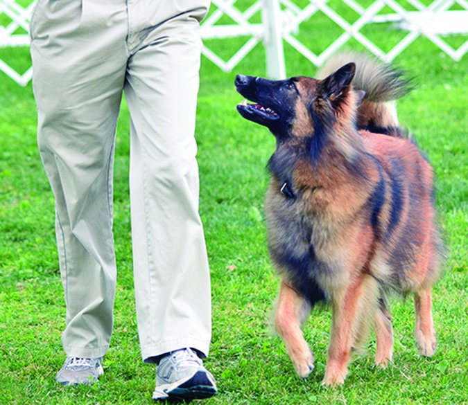 Conviértase en Campeón de Deportes de Perros - ¡En casa!