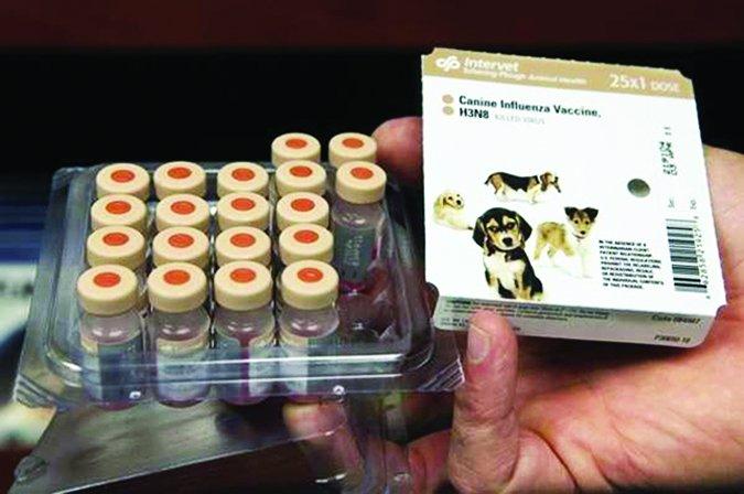 Prevención y tratamiento de la tos de las perreras