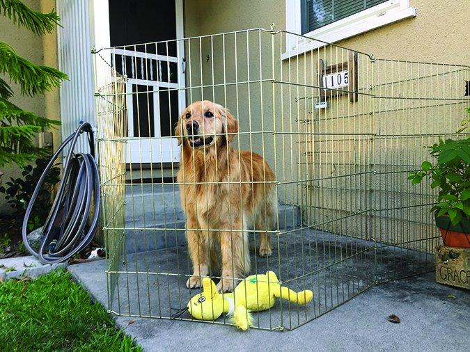 Poner fin a los perros que se lanzan a las puertas