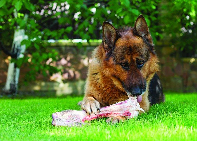 Perros y carbohidratos: es complicado