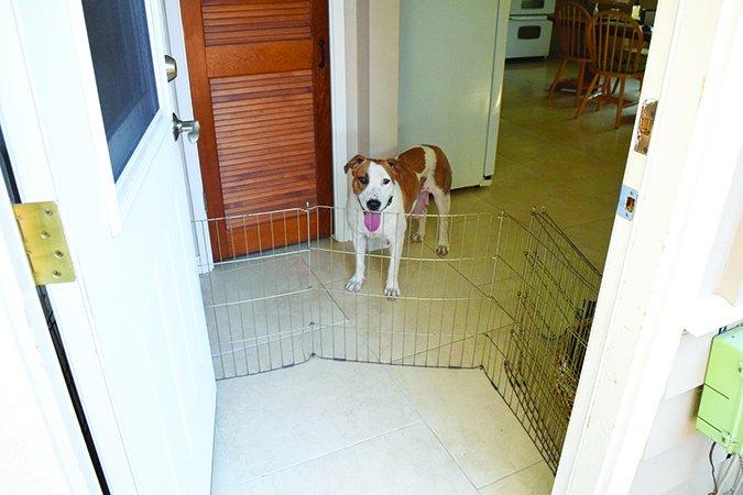 Etiqueta para los huéspedes de la casa para los perros