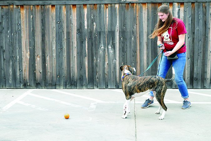 Cómo enseñar a su perro a alejarse!
