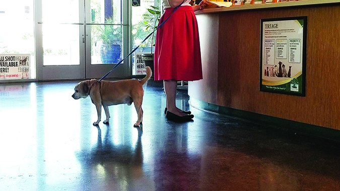 Convulsiones de perro: Causas y tratamientos