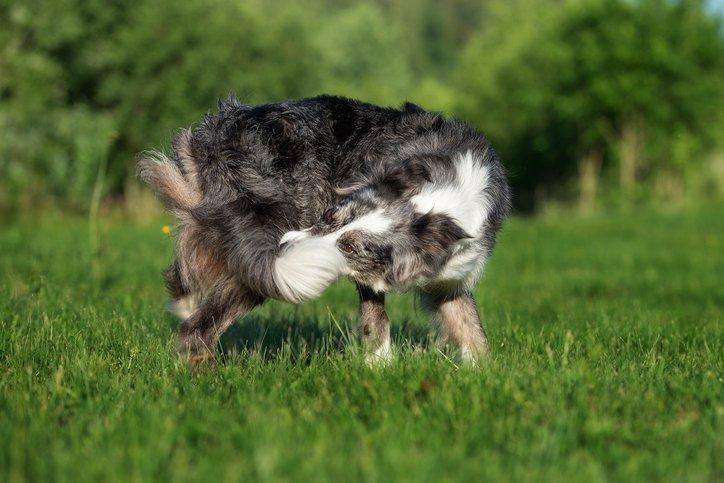 Perros autistas: ¿Pueden los perros tener autismo?