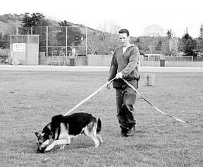 Hierbas para mejorar el rendimiento de perros competitivos