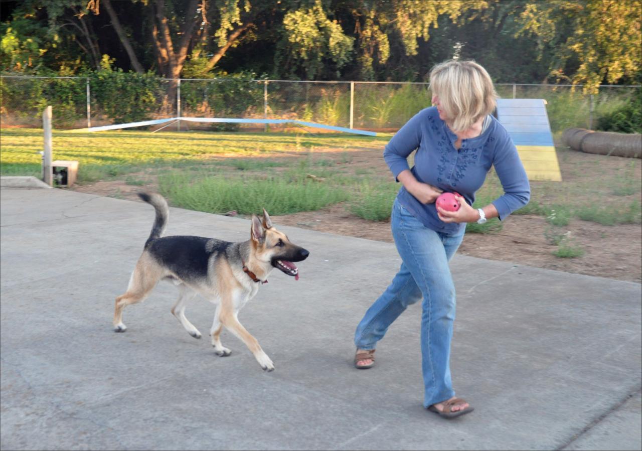 5 cosas que hacer si tu perro no viene a ti