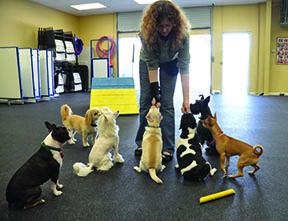 Entrenamiento de perros pequeños