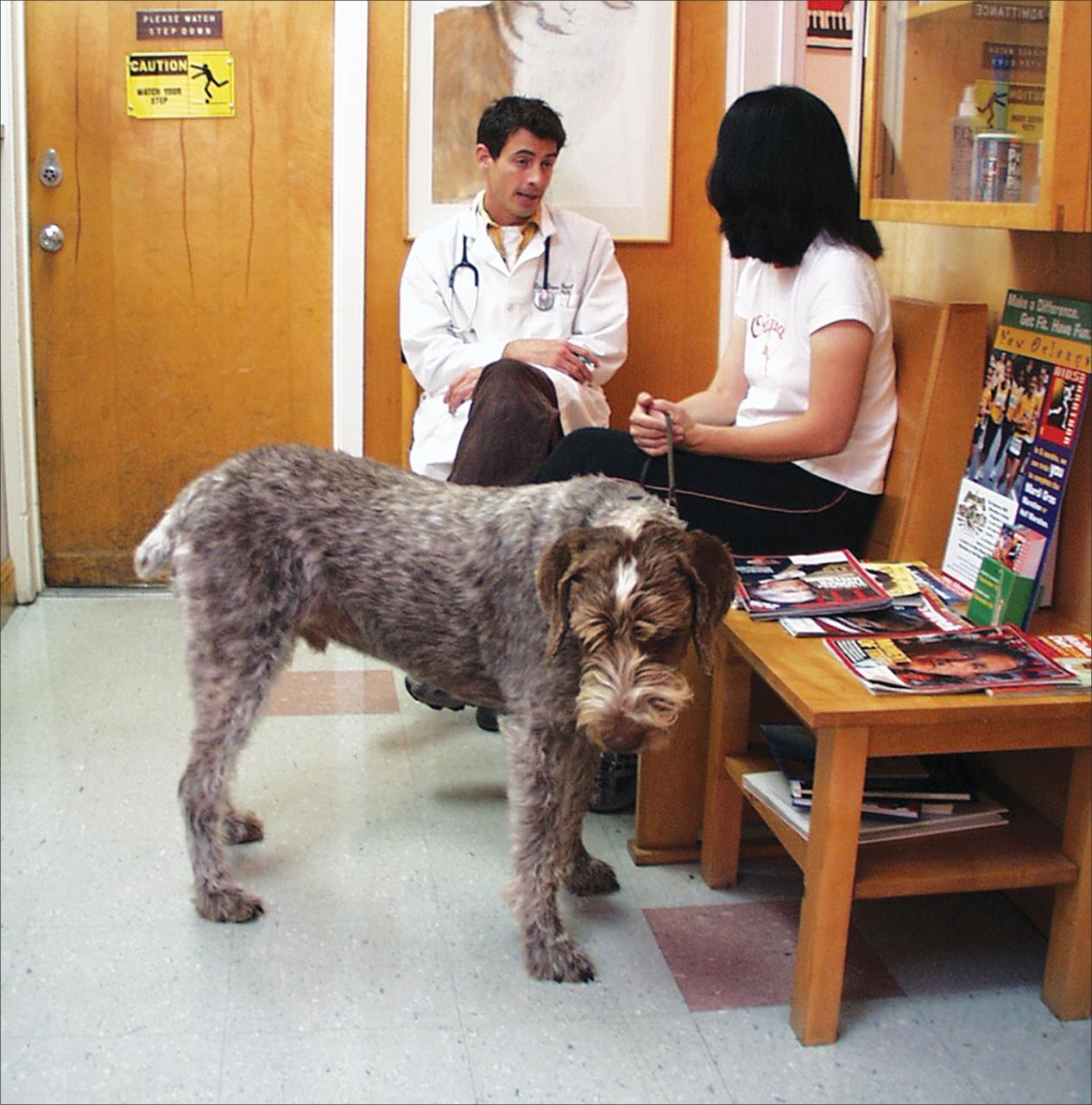 Cuándo ver a un veterinario y cuándo ver a un entrenador