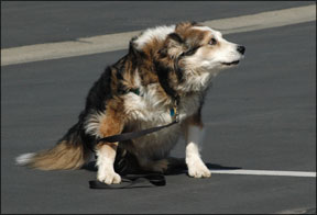 Enfermedad Vestibular Canina