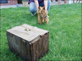 Earthdog, una actividad de entrenamiento de perros subterráneos