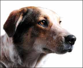 ¡Preguntas de entrenamiento de perros contestadas por los expertos!