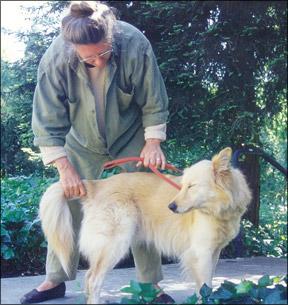 El TTouch Tellington para perros
