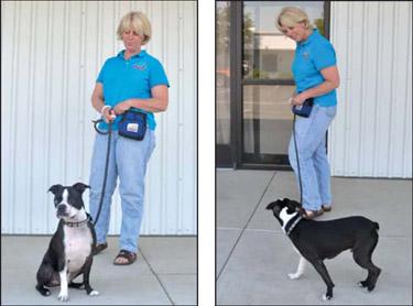 Cómo entrenar a caminar con la correa adecuada - ¡Detente!