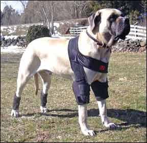 Equipo ortopédico para perros que aumenta el soporte de las articulaciones y la movilidad general