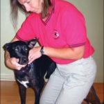 Los beneficios de la terapia de rehabilitación para perros