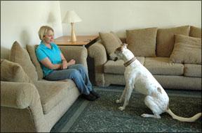 Aumente la fiabilidad de su perro