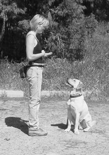 """El uso de """"bolsas de cebo"""" en el entrenamiento de perros"""