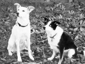 ¿Nuevo en el entrenamiento positivo de perros?