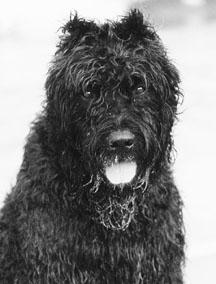 Vacunación y virus del moquillo canino (CDV)
