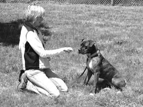 Métodos positivos para el entrenamiento de la obediencia