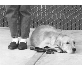 Comprender el entrenamiento de perros basado en la recompensa