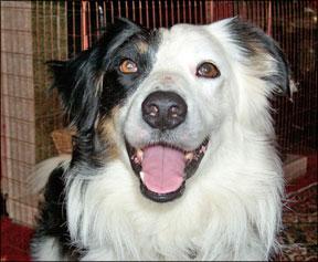 Ejercicios para perros y prevención de lesiones