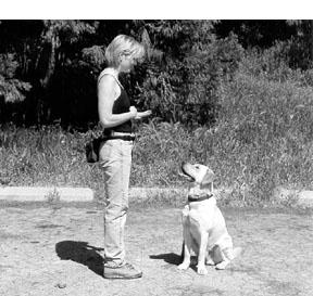 Entrenando a su perro para que siga usando los tacos