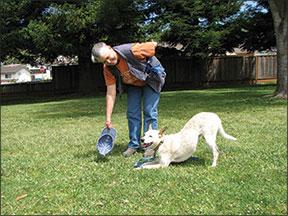 ¿Busca un truco divertido para enseñarle a su perro?