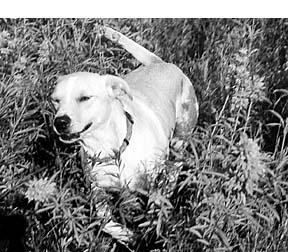 El cambio de alimento para perros detiene las convulsiones