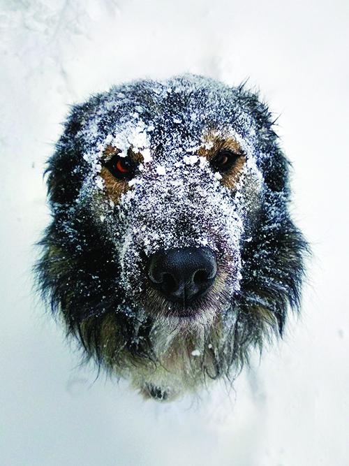 Advertencias de invierno para su perro