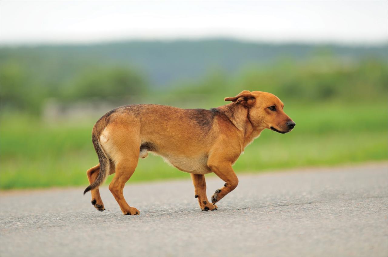 Cómo atrapar a un perro suelto