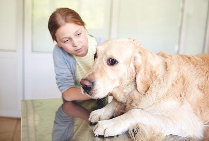 Cuidado veterinario sin miedo