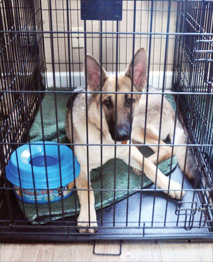 5 cosas que debe hacer si su perro necesita un descanso en la jaula