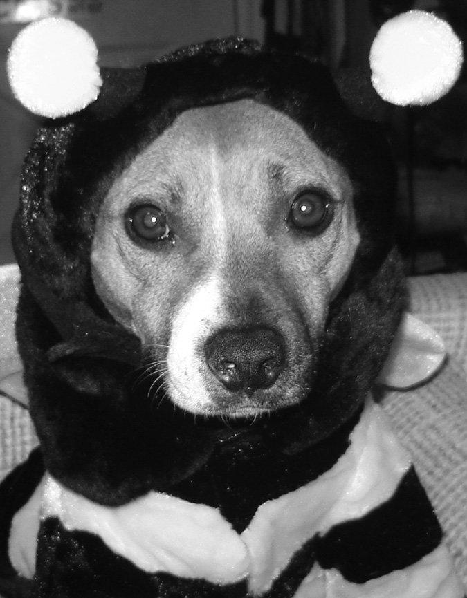 Los productos apícolas tienen un significado especial para los perros