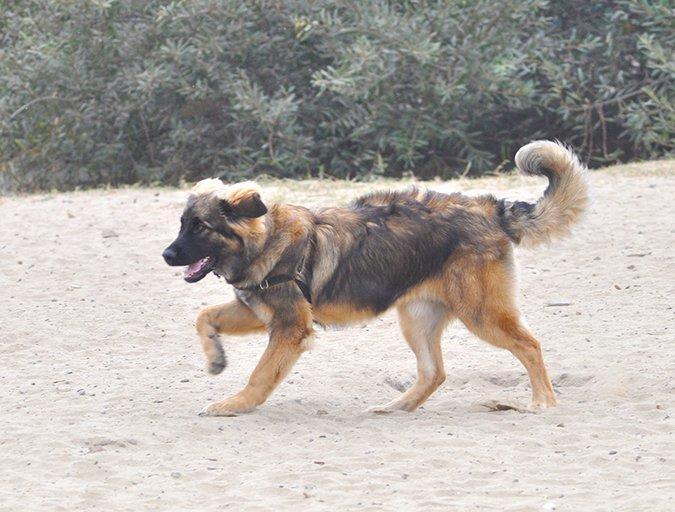 ¿Debería correr para llevar a su perro a la clínica veterinaria de emergencia?