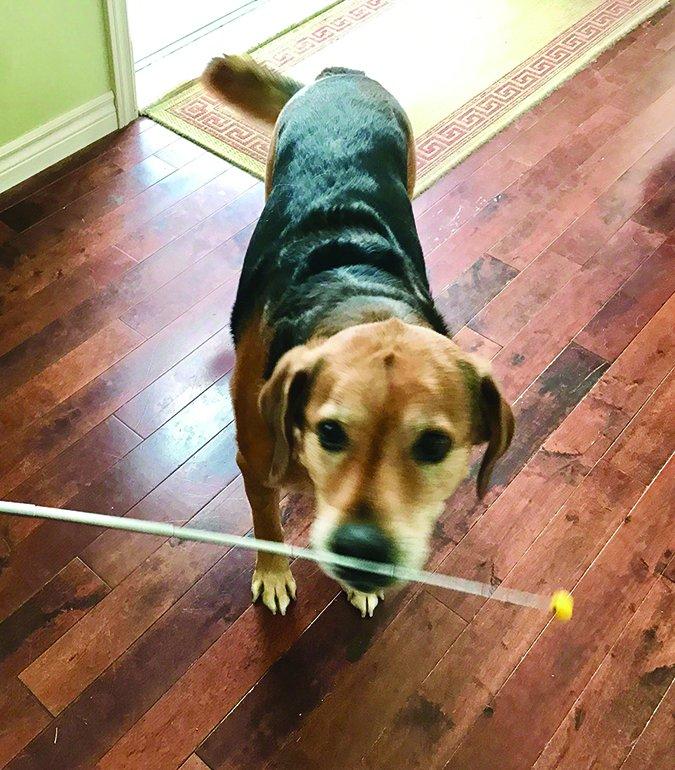 Cómo moldear el comportamiento de su perro