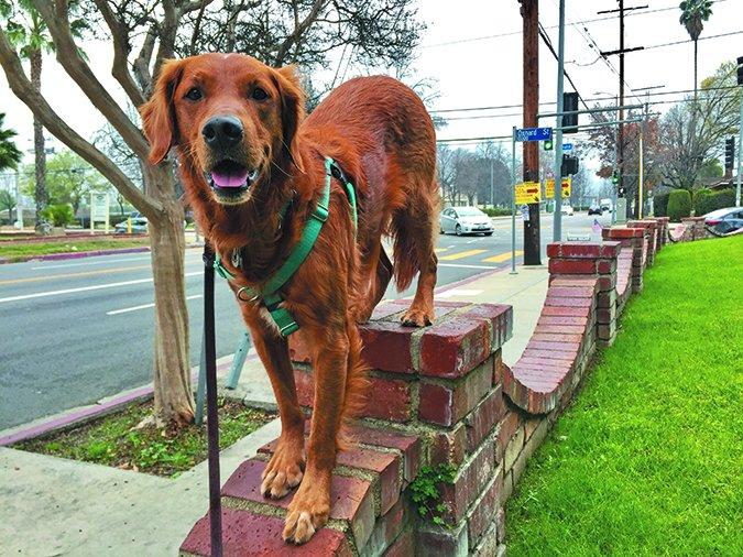 Parkour de perros: Atletas urbanos caninos