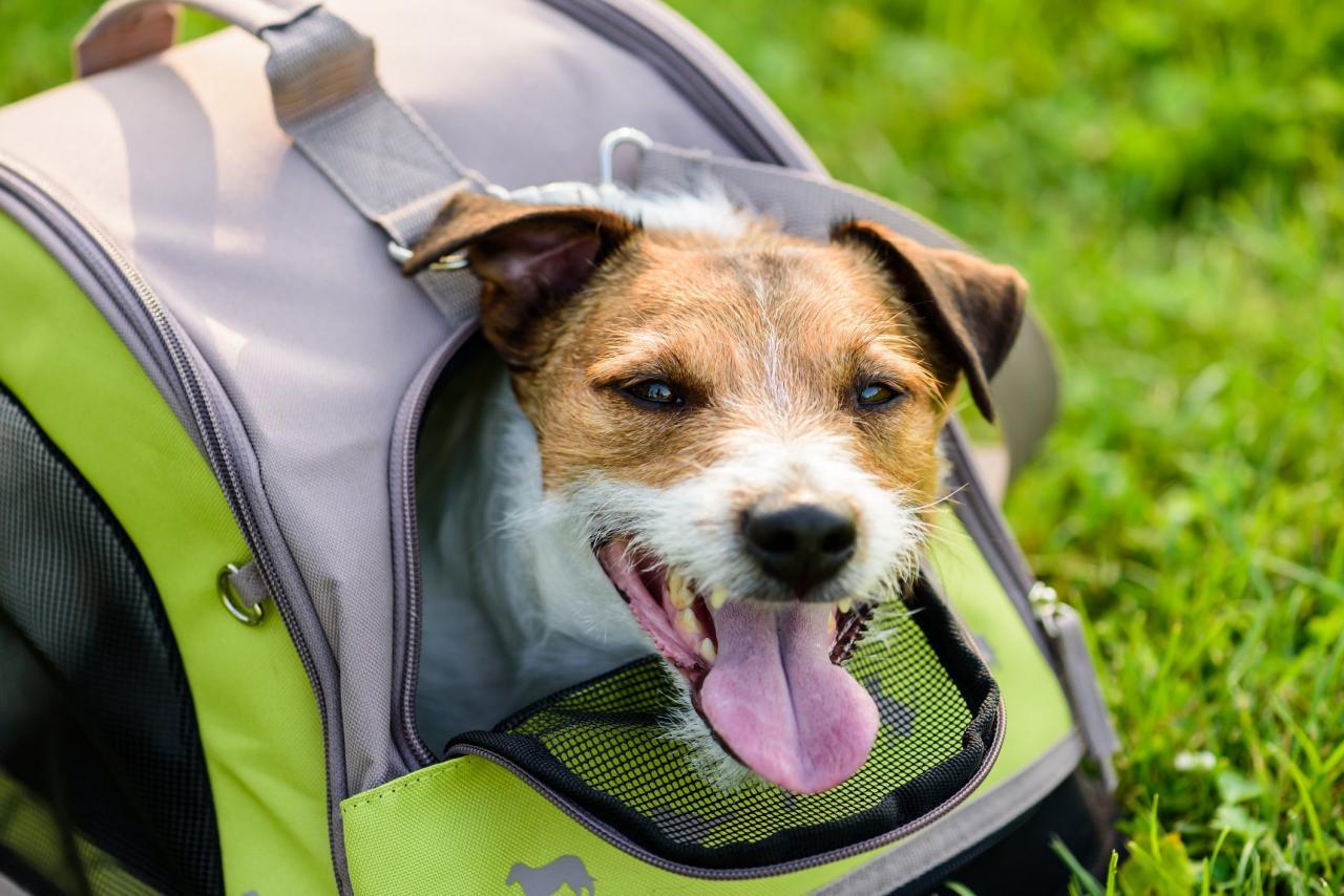Los mejores tipos de cajas para el entrenamiento de perros