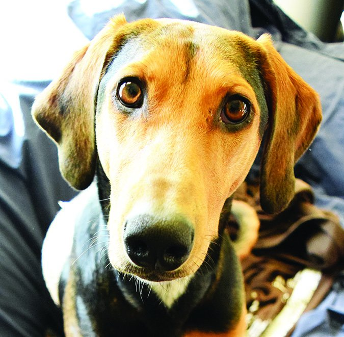 Hemangioma en perros