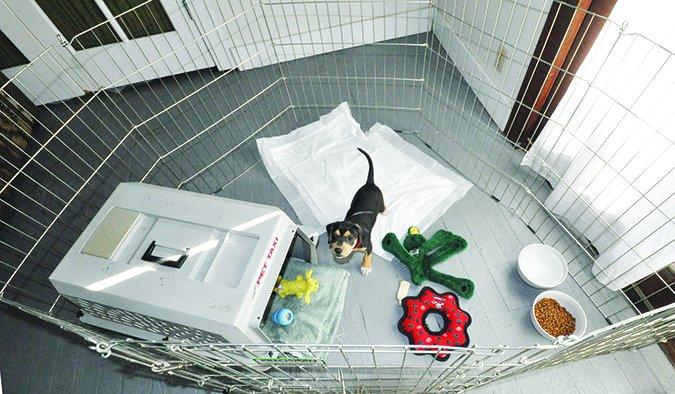 Cómo entrenar a un perro para ir al baño