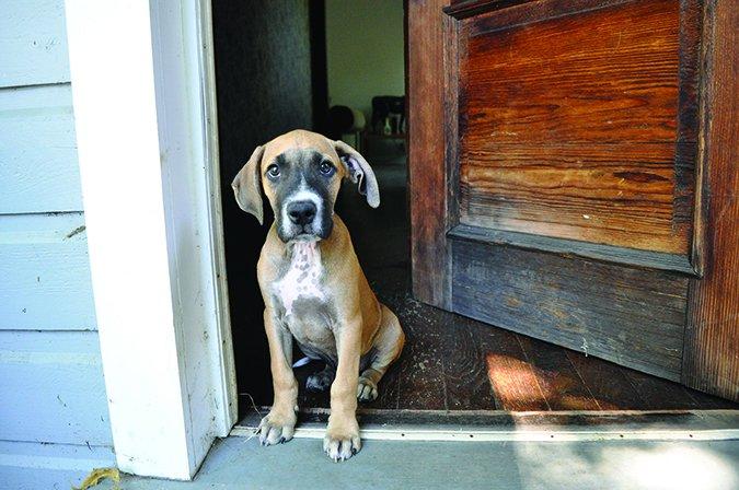 Causas y remedios de la diarrea de perro