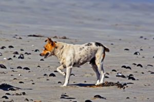 Cojera de perro: Posibles causas y tratamientos