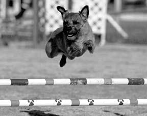 Cuidado holístico de perros y chequeos holísticos para perros atléticos