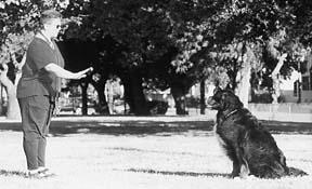 Clases de Obediencia de Rally para Perros