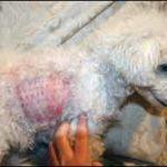 Cuando se trata de pruebas de alergia, algunos perros reprueban...