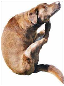 Un estudio revela las enfermedades más comunes de los perros
