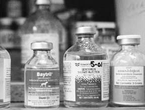 Los peligros del uso indebido de antibióticos para los perros