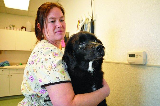 Trucos para darle a su perro el medicamento para los ojos