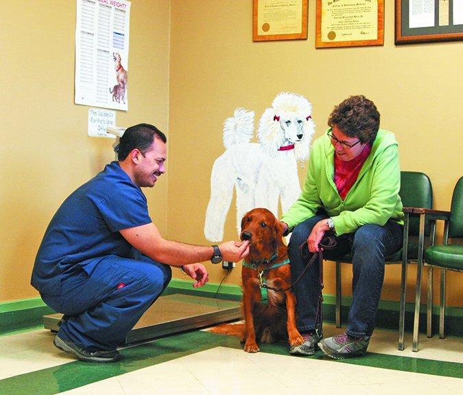 Hacer que las visitas al veterinario sean menos espantosas